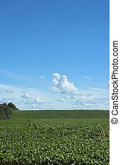 Farm field blue sky - Portrait view of farm field in early...