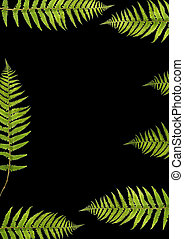 Fern Beauty - Abstract design of seven fern leaf segments...