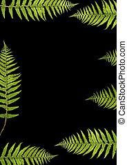 Fern Beauty - Abstract design of seven fern leaf segments...