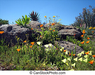 Rocks and flowers - Spring flowers growing in rocky outcrop