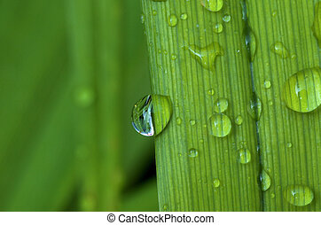 Water Droplet reflection - Water droplet hanging off the...