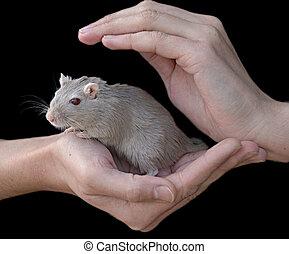 ratón, tenencia, Manos