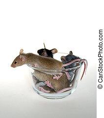 ratones, taza
