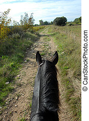 horse walking - horseback riding on a black stallion on a...