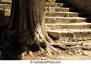 Tree and flight of steps - The wise old tree and the granite...