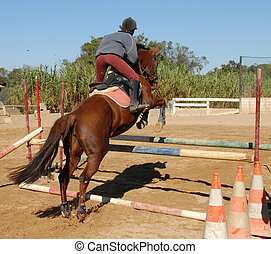 jumping brown horse - training of competiyion in jumping for...