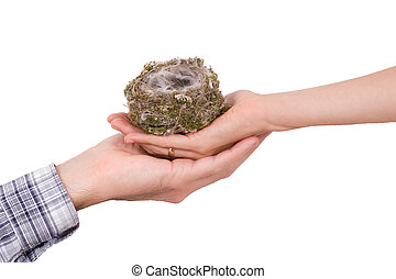 Two hands with birds nest on white - Two hands with birds...