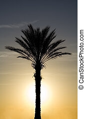 Tropical Palm Tree with Sun Set Background