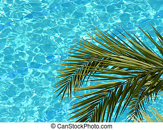 palm and water pool