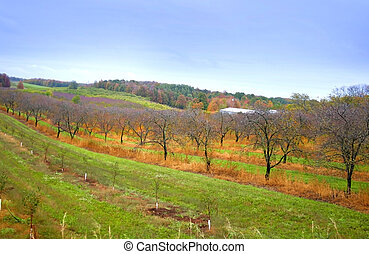 wineyard in Michigan\\\'s upper peninsula during autumn time
