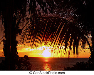 tropical island sunset - tropical island suset through palm...