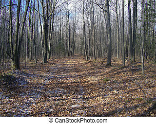wilderness forest trail - old logging trail through a forest...