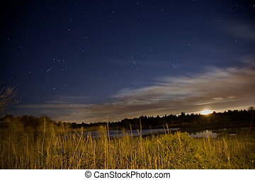 pantano, luna, estrellas