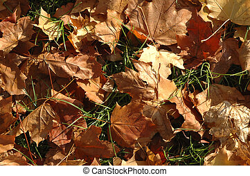 leafy background - crisp dying leaves lying on the ground