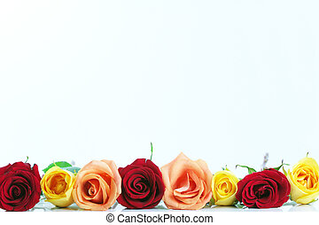 Floral rose borders - Red, yellow and peach color roses...