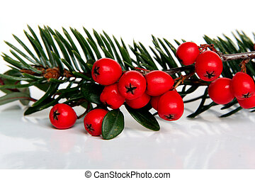 Christmas holly - Natural Christmas decoration, sprig of...