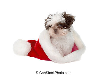 Puppy In A Santa Hat 2 - Cute little Shih Tzu puppy wearing...