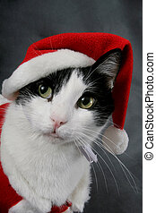 Ready for Christmas - A cat wearing a red Santa suit