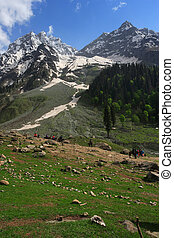 Himalayas - Mountain trekking in the Himalayas of Kashmir,...