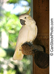 Parrot - White parrot in Bali a zoo Indonesia