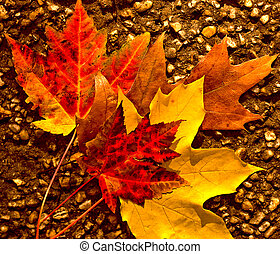 Autumn Leaves - Arrangement of fallen Fall leaves