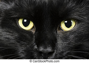 noir, chat