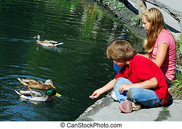 Children feeding ducks at the pond in a park