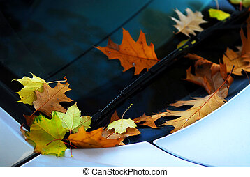 Fall leaves on a car