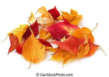 Autumn leaves - Dry colorful autumn leaves on white...