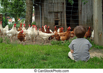boy watching his chickens