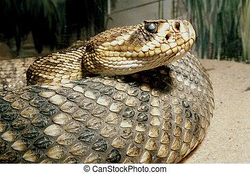 serpiente de cascabel, madera