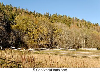 Autumn Field - A field with yellowing grass, frames by a...