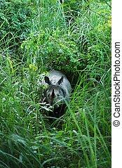 One Horned Indian Rhino - One horned indian rhino in chitwan...
