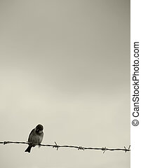 Fly to Freedom - Small bird perched on barbed wire -...