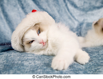 Bah humbug - Cute little kitten wearing a santa hat and...