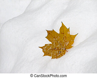 Leaf on snow 2 - The yellow maple leaf on the snow...