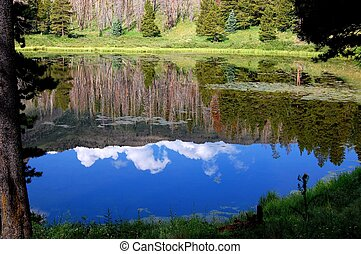 Reflections in a Lake
