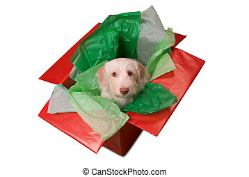 Puppy in gift box - Cute yellow puppy popping out of a gift...