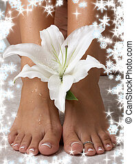 lily with snowflakes - wet feet and madonna lily with...