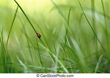 red bug climbing a blade of grass in a green scenery