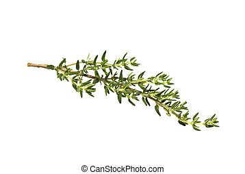 fresh thyme branch over a white background