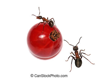 the girl on a sphere - ants and currant tribute to Picasso