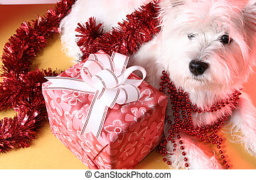 Santa claus - Cute white puppy with present and snowflakes.