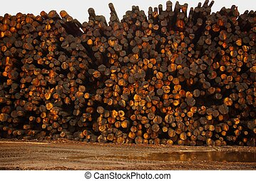 Logs - A tall pile of logs at a lumber mill.