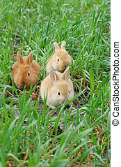 rabbit landing - three rabbits landing on grass
