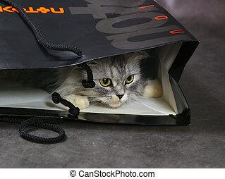 cat in box - Grey kitten in a basket. Studio shot.
