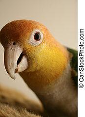 Pet Parrot 2 - Precise close-up shots of a small pet bird, a...