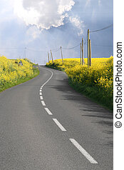 Through the rape fields - Curved road through overflowing...
