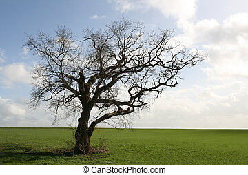 Gnarly old tree - Isolated in the countryside