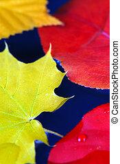 outono, folhas, água